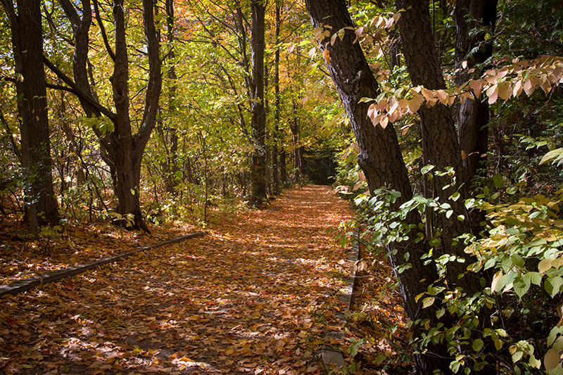 A trail through the woods covered in fallen leaves in autumn.