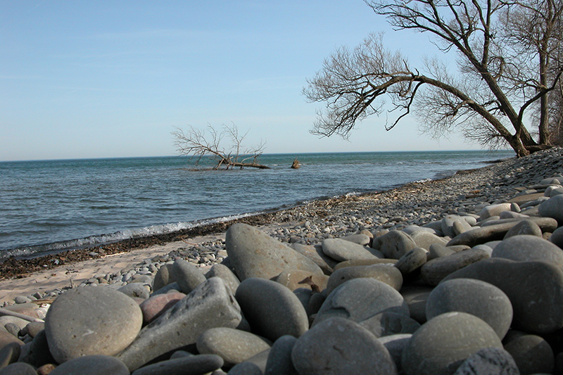 A pebble beach along the lake and a tree overhanging the beach.