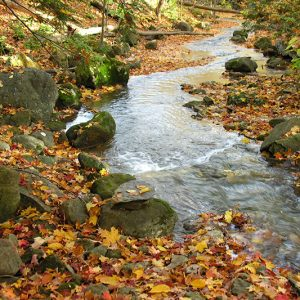 A creek through the forest in autumn with fallen leaves on the ground.