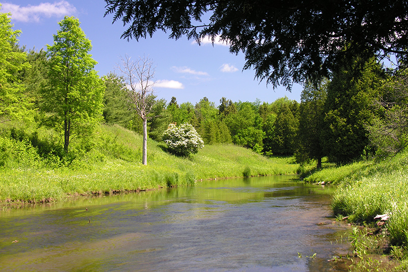 A river with lush green grass and trees beyond.