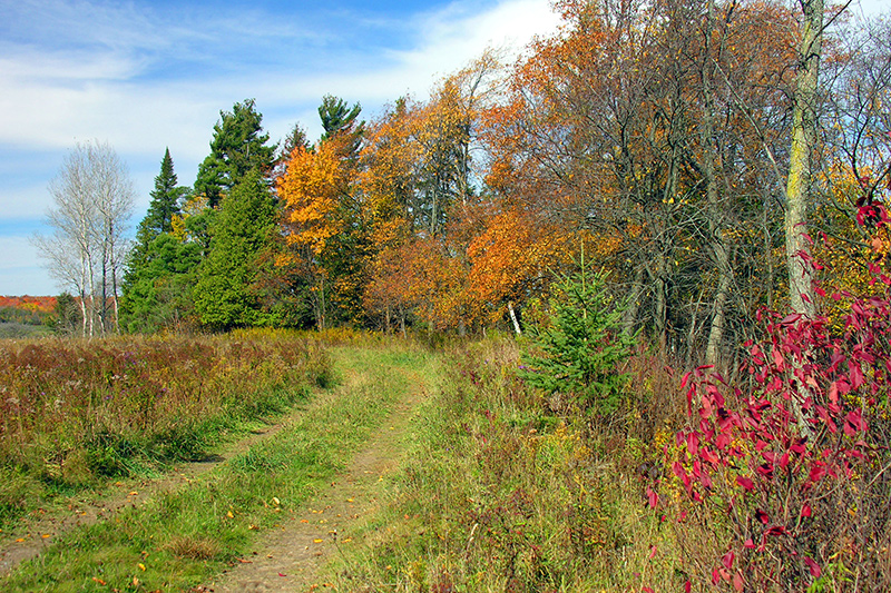 Fall coloured trees along one side of a grassy path.