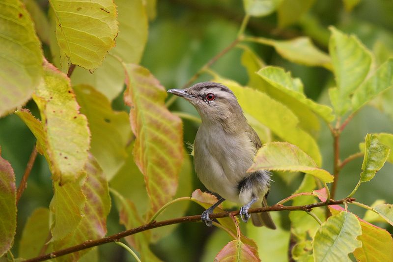 Keep migratory birds safe this fall