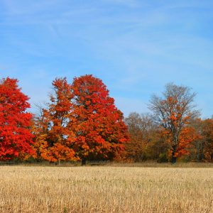 Fabulous Fall Foliage