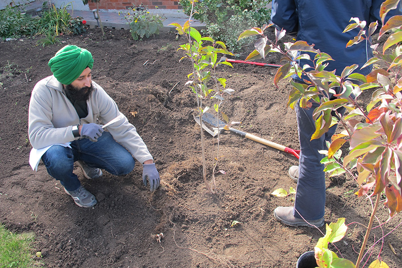 Resident plants a tree in their garden