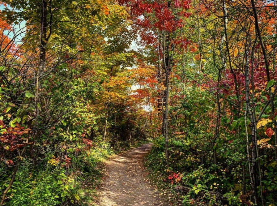 Fall colours and trail in forest