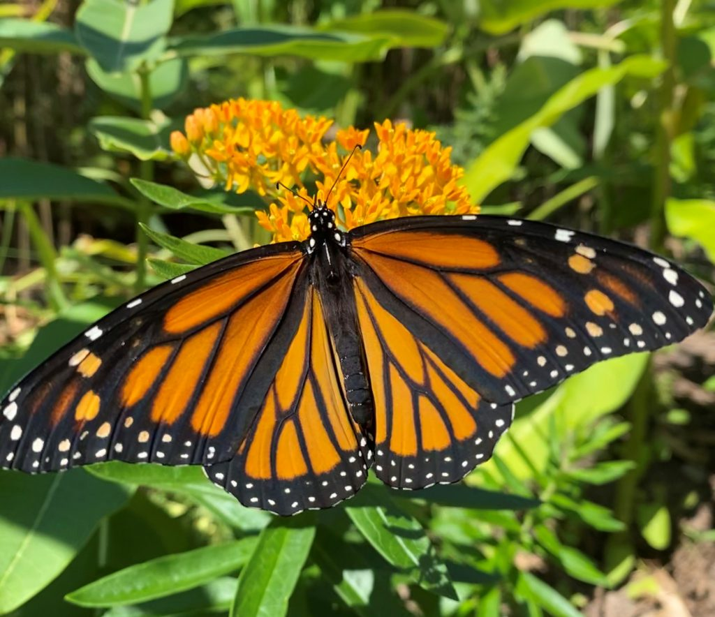 Butterfly Blitz 2020 and beyond!