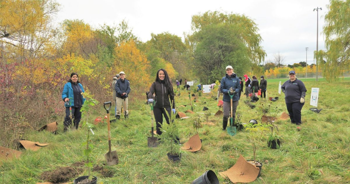 A group of individuals at a tree planting event while being socially distanced.