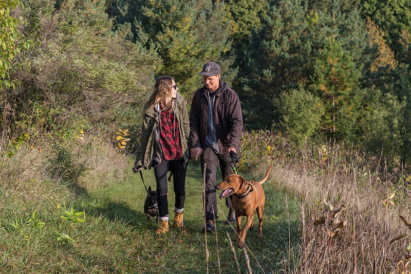 A young couple walking their two dogs along a grassy path.