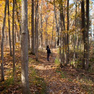 A hiker pauses along the trail in the woods in fall to look up.