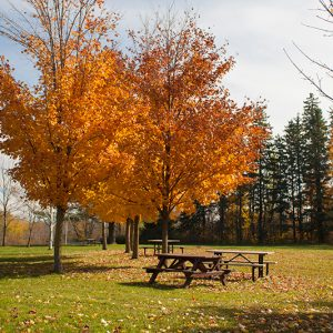 Picnic benches in an open field area sit under trees with fall colours.
