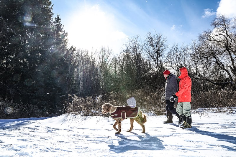 A couple walking their dog in the winter at Island Lake Conservation Area.