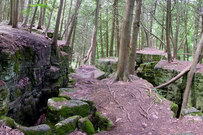 The trail at Limehouse Conservation Area, shown with views of uneven and rocky landscapes, surrounded by forest.
