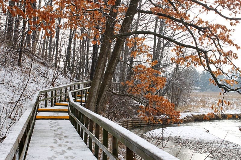A boardwalk trail through Rattray Marsh Conservation Area between the trees and the marsh. It is early winter with snow on the ground and fall leaves still on the trees.