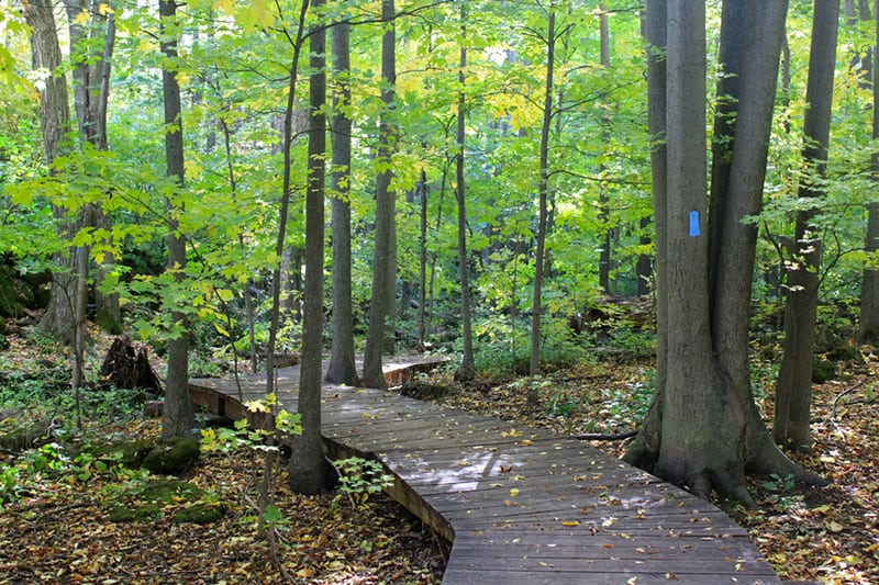 A boardwalk path through the trees at Silver Creek Conservation Area.