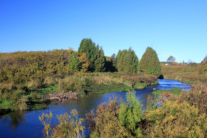 A view at Upper Credit Conservation Area of the river winding past trees.