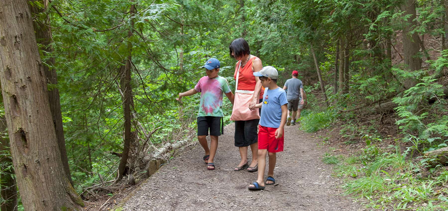 An adult and two children walk along a trail in Belfountain Conservation Area, looking at the trees.