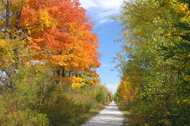A bright orange tree signifies the beginning of fall and changing colours along the trail.