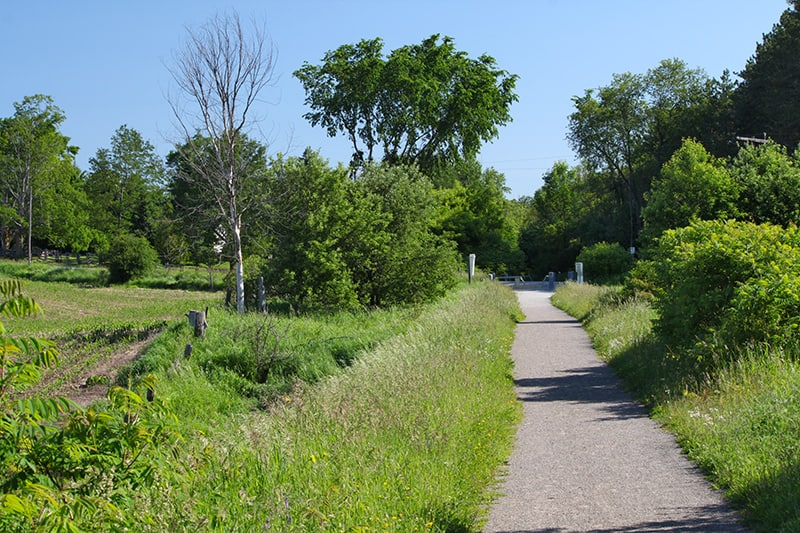 A path between trees and a grassy area in summer.