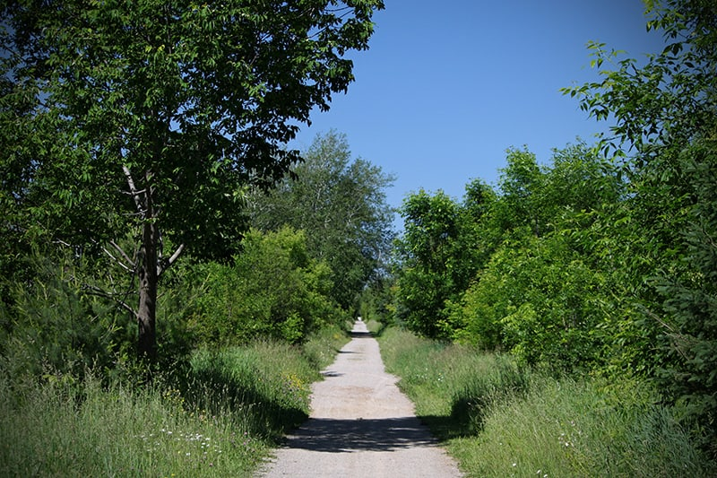 A trail surrounded by green trees and grass.