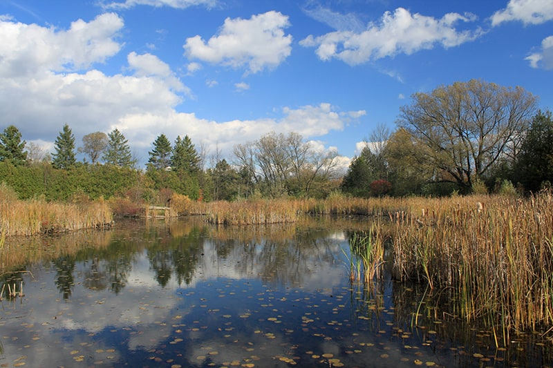 The wetland at Terra Cotta in the spring, when the grasses are still brown.
