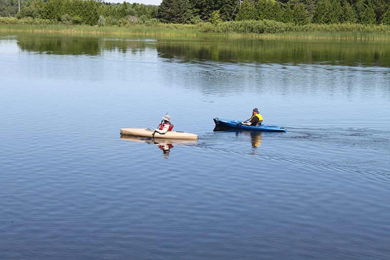 Two park visitors kayaking side-by-side at the north end of Island Lake.