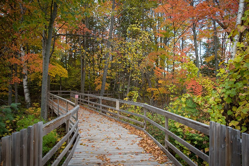 A wooden bridge trail covered in fall leaves at Island Lake.