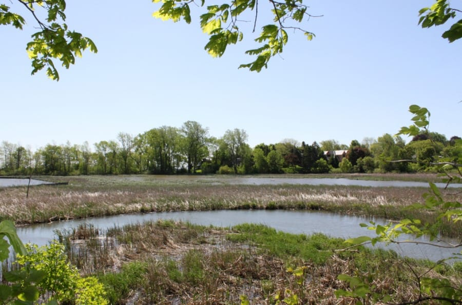 Why do Water Levels Change at Rattray Marsh?