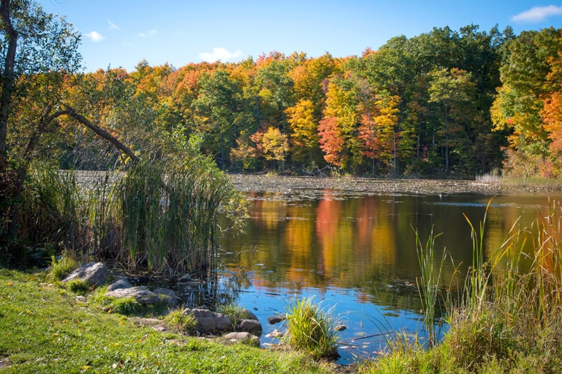 Wolf Lake in the fall with colourful trees reflecting in the still water at Terra Cotta.