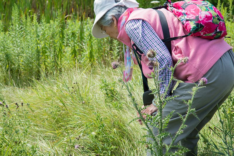 An adult program attendee bends down to look closer at a patch of tall green grasses in a natural area.