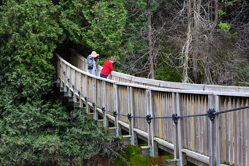 Two park visitors crossing over a wooden suspension bridge pause to look over the rail..