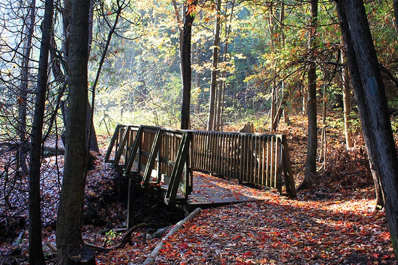 A small wooden footbridge along the trail in fall, with fallen leaves all around.