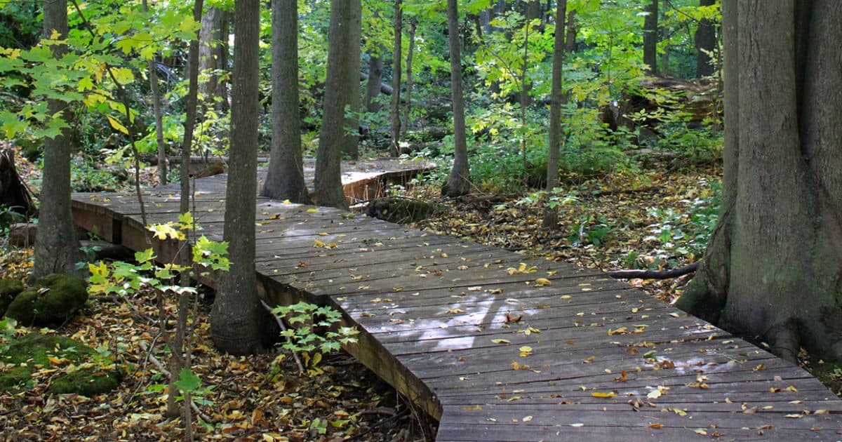 Boardwalk surrounded by mature trees at Silver Creek