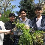 Four young people posing with invasive plants removed from the ground in a suburban setting.