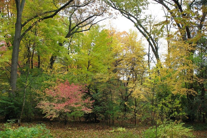 A group of trees and bushes in fall colours.