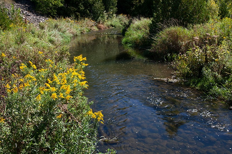 A stream with small yellow flowers on its bank.