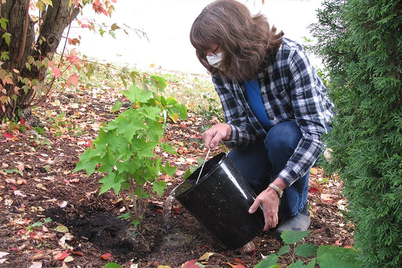 A person wearing a mask, kneeling down and planting in a garden.