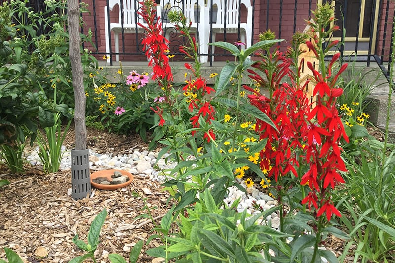 Colourful blooms in a rain garden, set before a home's front porch.