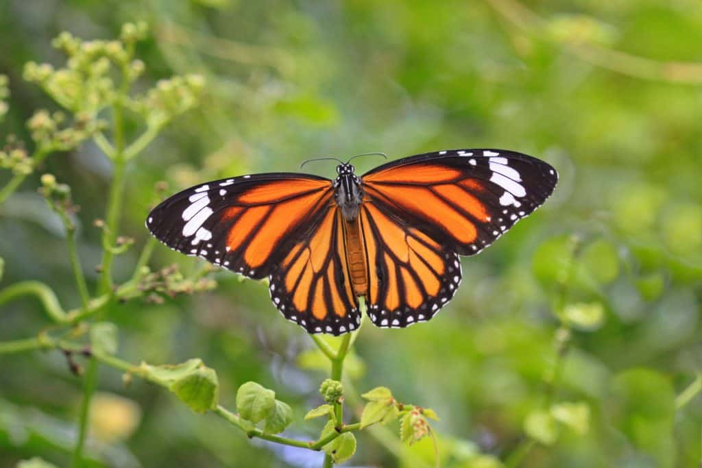 Discover the Beauty of Butterflies