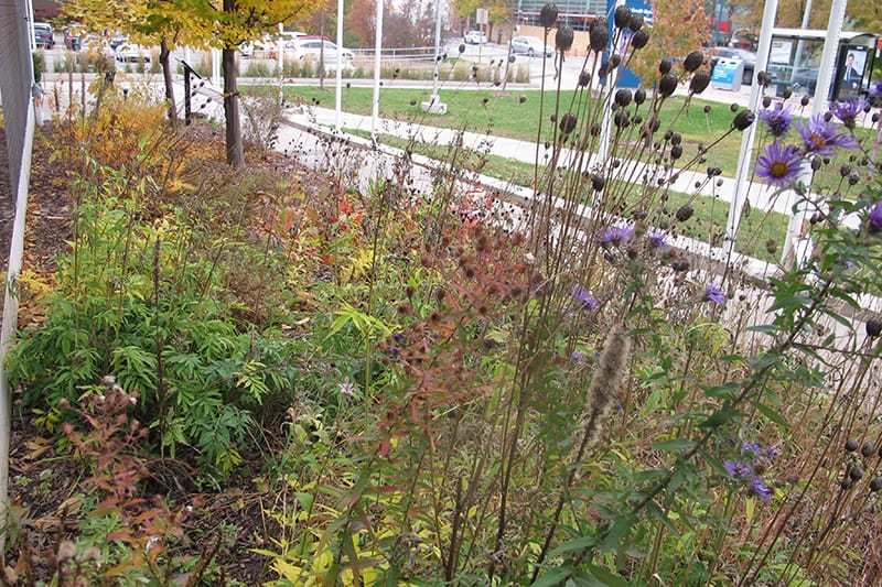 Autumn colours in a garden of flowers, plants and trees in a urban setting.