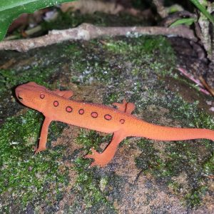 Facts you may newt (not) know about reptiles and amphibians