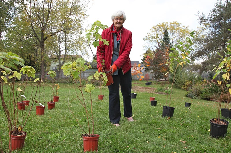 A resident carrying a tree to a place to plant it on their property, amongst other trees in pots ready to be planted.