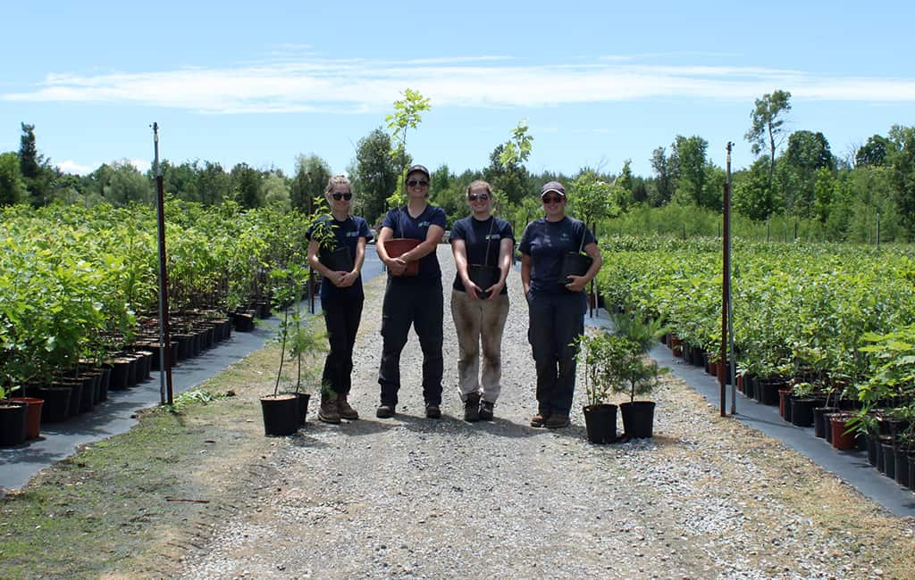 CVC staff posing with potted trees at the Terra Cotta nursery surrounded by many potted trees.