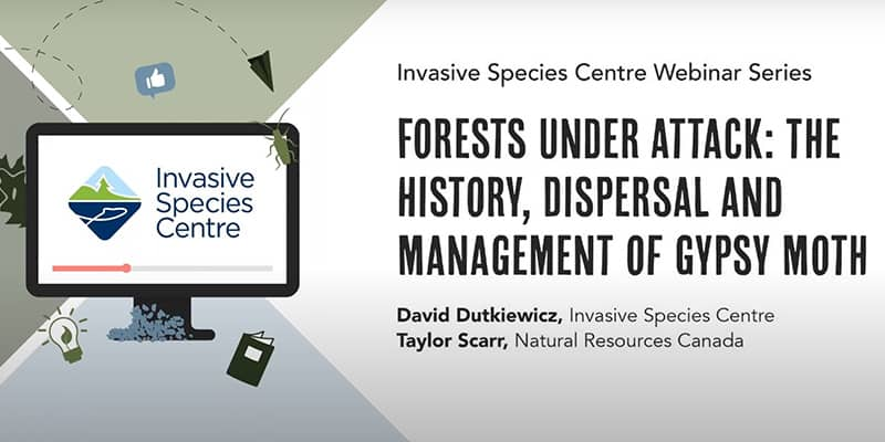Screenshot of video from Invasive Species Canada. Forests under attack: The history, dispersal, and management of gypsy moth..