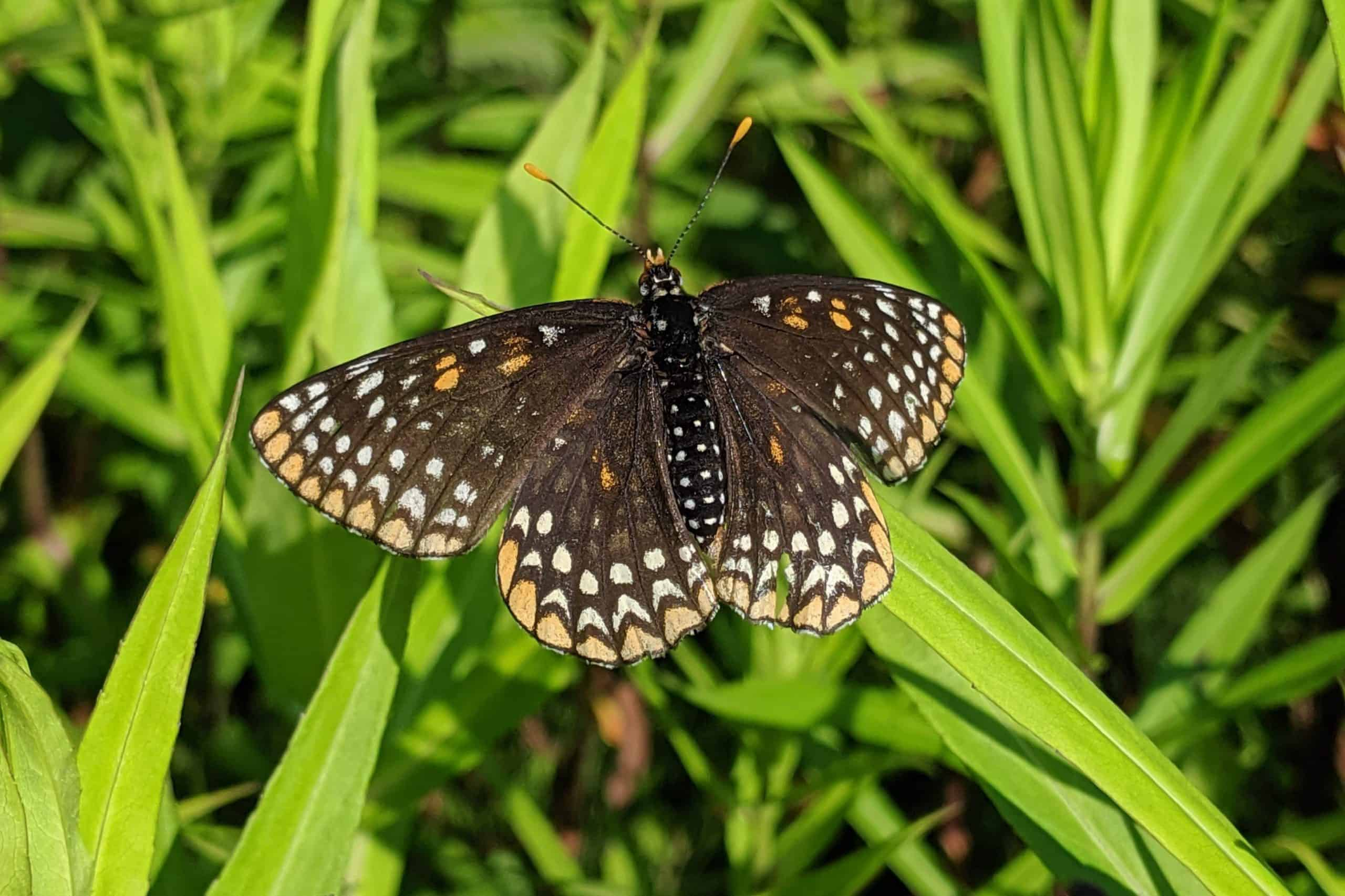 a butterfly resting on a blade of grass