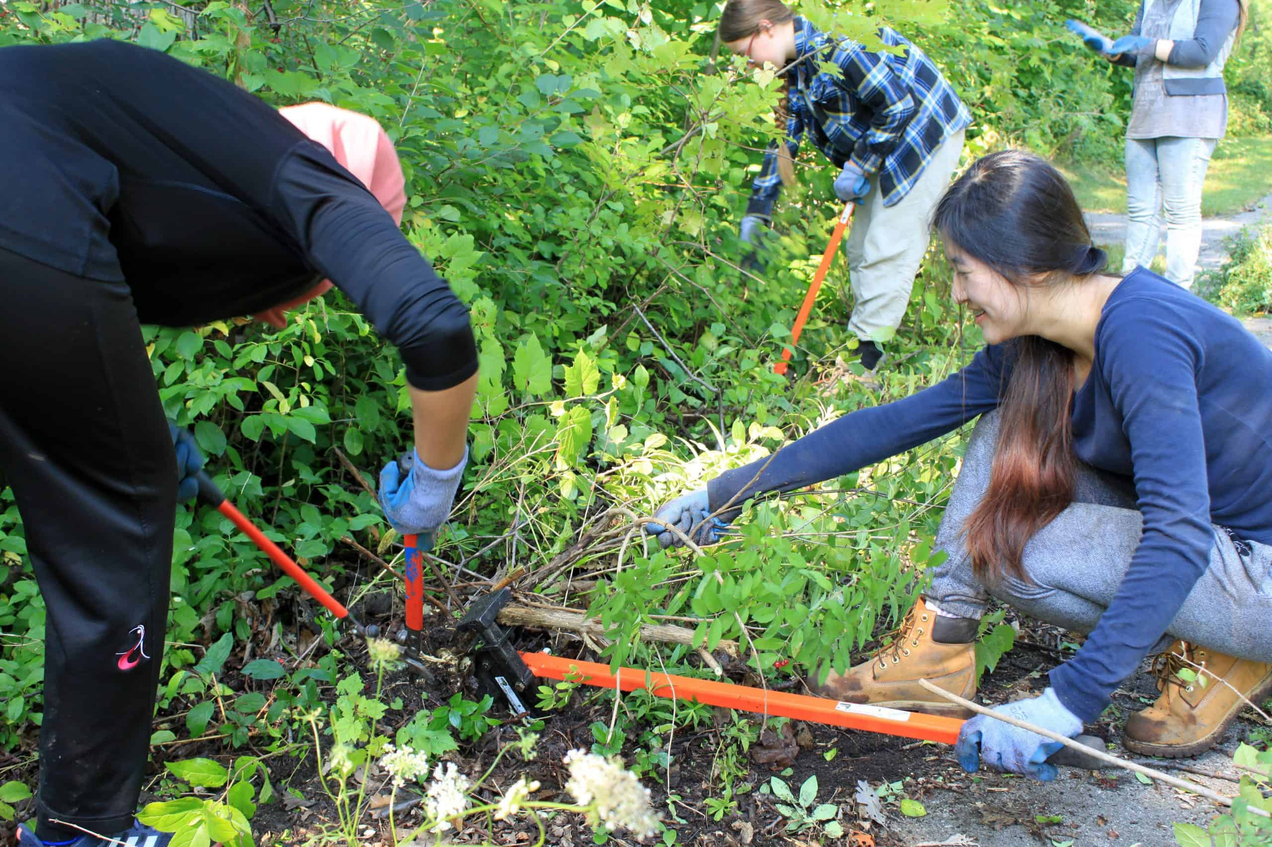 a group of teens using hand tools to remove invasive species