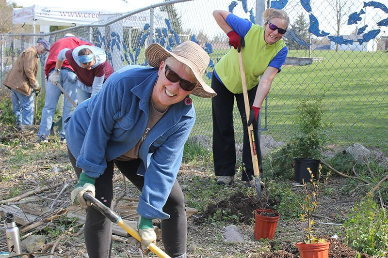 Volunteers using shovels and planting trees at a community event.