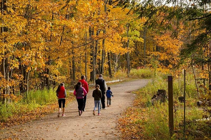 Group walking along forest trail in fall
