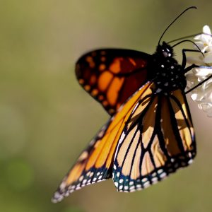 Butterfly Blitz Results are Flying in!