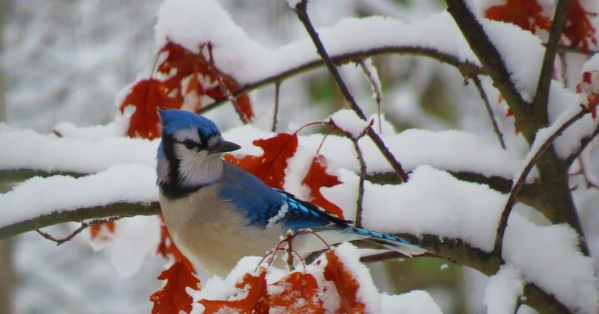 Bird on branch covered in snow