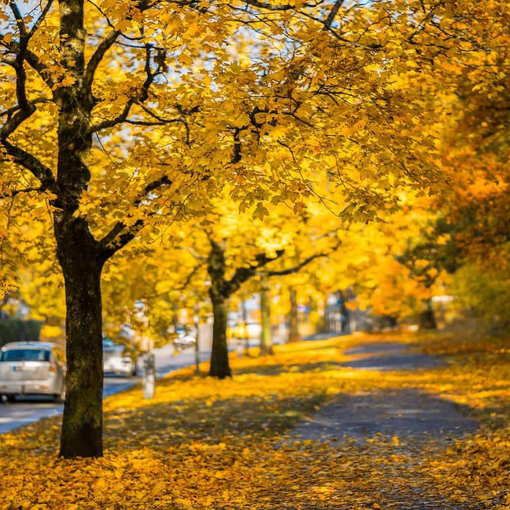 Road with trees and fall colours
